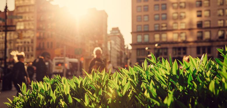 Nachhaltigkeit mit Netzwerk-Kameras und Sensoren