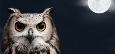 Owl, seeing in the dark
