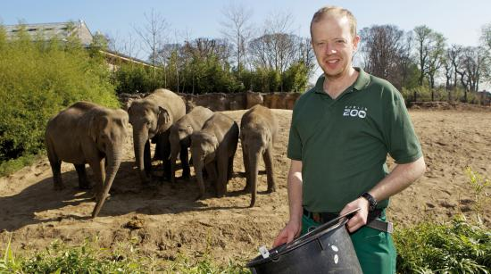 Zoo keeper with elephants